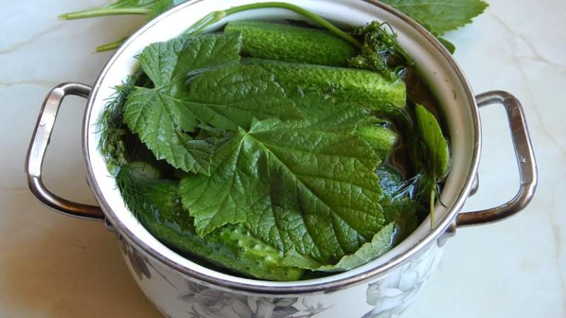 Огурцы соленые в кастрюле: простые рецепты соления, советы по приготовлению и хранению заготовок