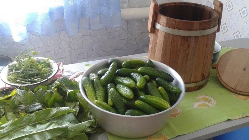Засолка огурцов в бочке на зиму холодным способом: выбирайте лучший рецепт