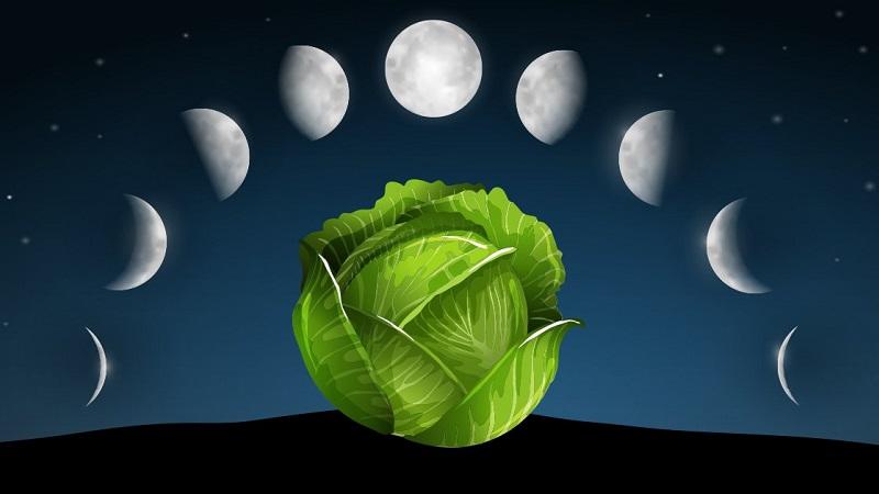 Секреты вкусных заготовок: когда лучше солить капусту на зиму по лунному календарю